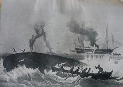 Le hors-texte de la chasse à la baleine, inséré à deux reprises (p. 97 et p. 401)